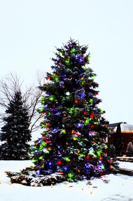 zylstra-christmas-lights-p4
