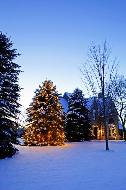 zylstra-christmas-lights-p6