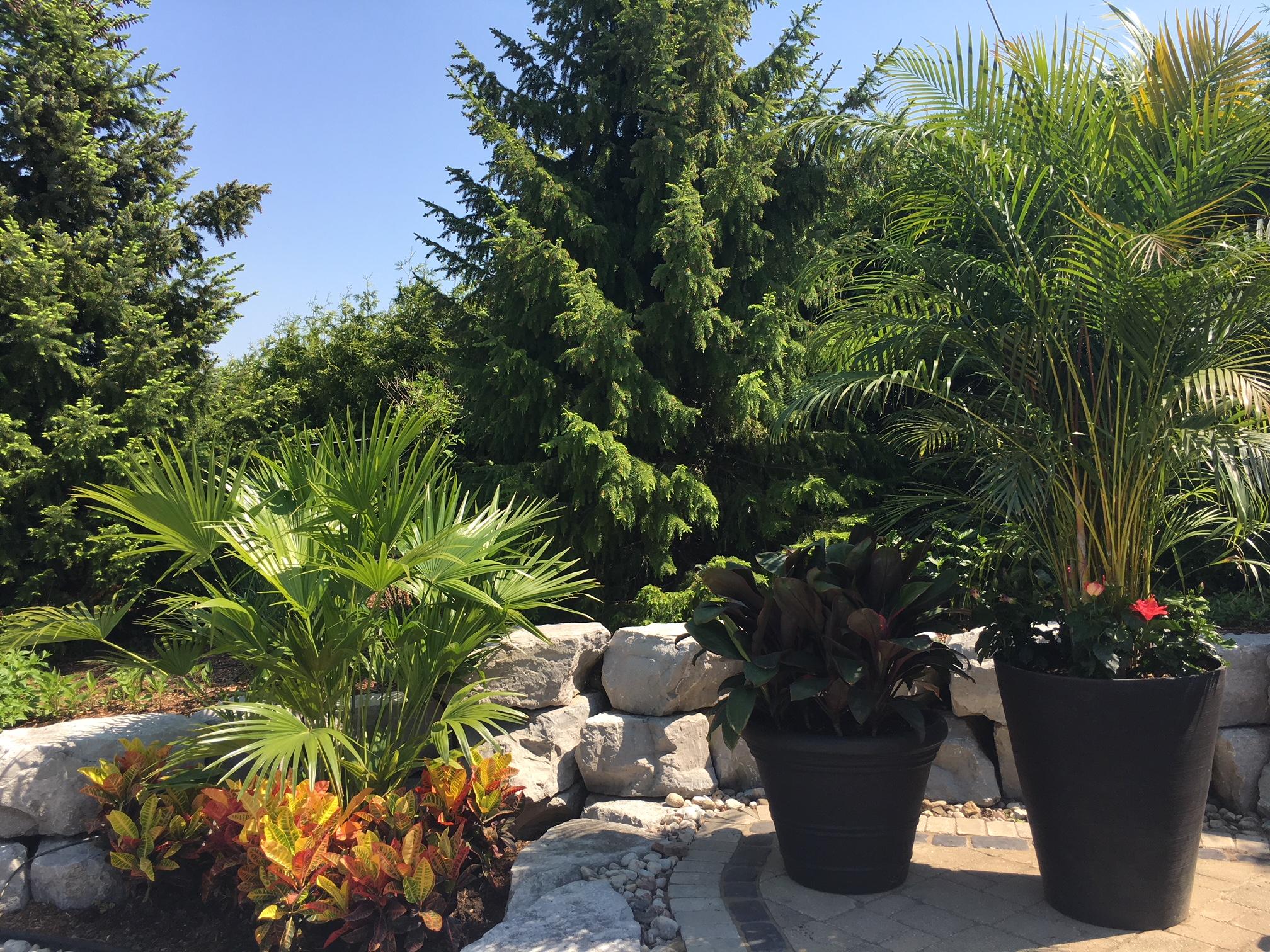 PALM TREES 2018