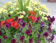 annual-mixed-planter
