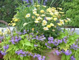 annual-planting-in-clay-pot-by-zylstra