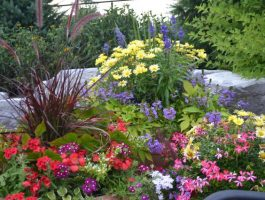 annual-planting-stunning-colours-by-zylstra