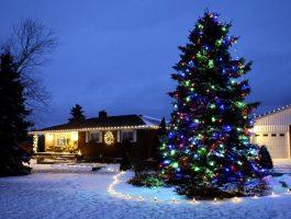 zylstra-christmas-lights-13